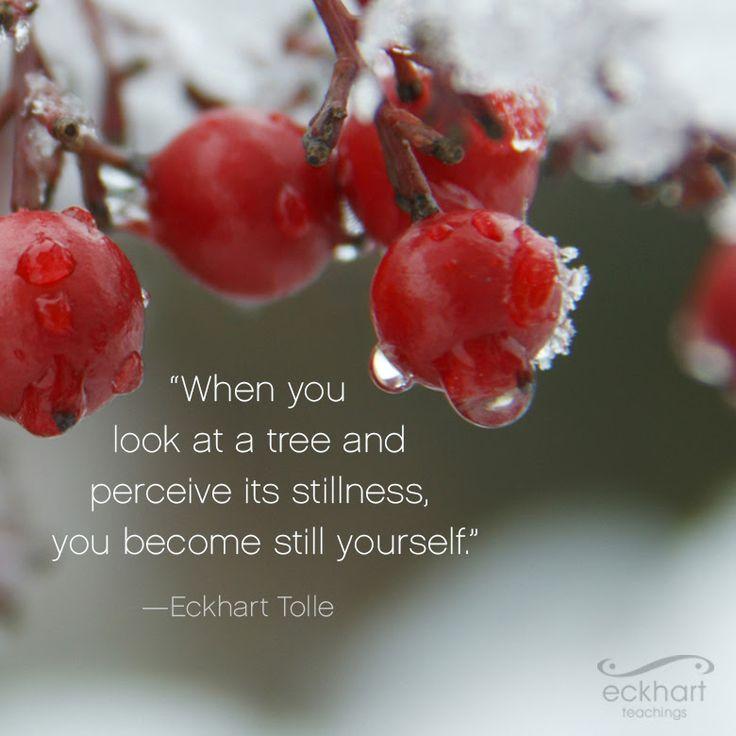 Cuando miras un árbol y percibes su quietud tú también te conviertes en quietud #pildorarojaparatuser #presentmomentreminder #eckharttolle