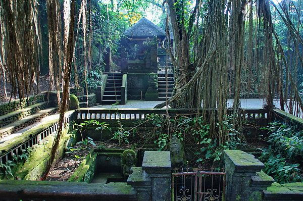 Wenara Wana Foundation manages the place with the aim to preserve the integrity and sanctity of holy sites in it and promote this place as a sacred site as one tourist destination for visitors in Bali.