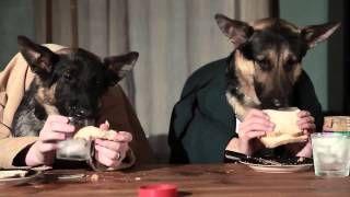 Смотреть онлайн видео Самый ржачный прикол с собаками, прикол с псом, новое смешное видео про животных, сборник  2014