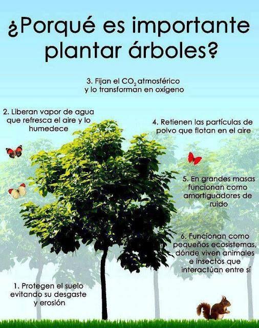 importancia-de-plantar-arboles.jpg