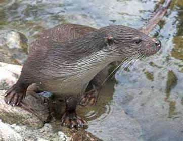A vízpart növény- és állatvilága