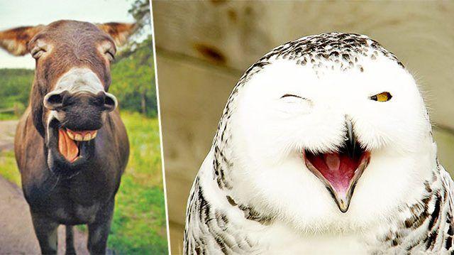 Ces animaux «souriants» illumineront votre journée
