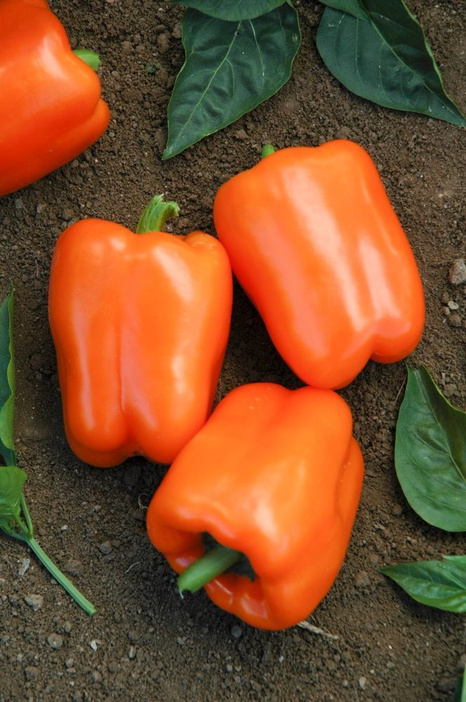 When To Plant Fruits And Vegetables