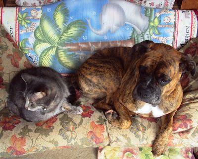 Ottawa Valley Dog Whisperer: naturlige, naturlægemidler EAR infektion behandlinger, retsmidler til hunde og katte