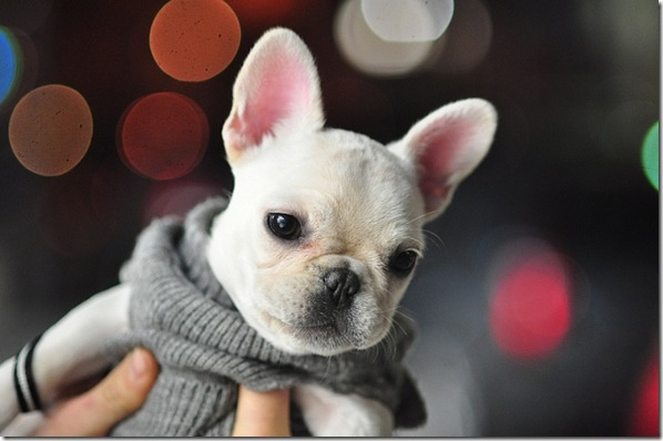Friday Favorites Tiny Puppies Puppys And Too Cute