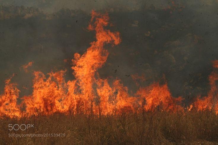 Burn off The AKIYOSHIDAI Karst Plateau by gozo_cedars