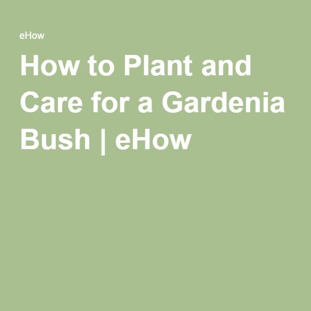 How to Plant and Care for a Gardenia Bush | eHow