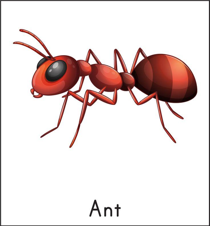 муравей на английском картинка подскажите контакты