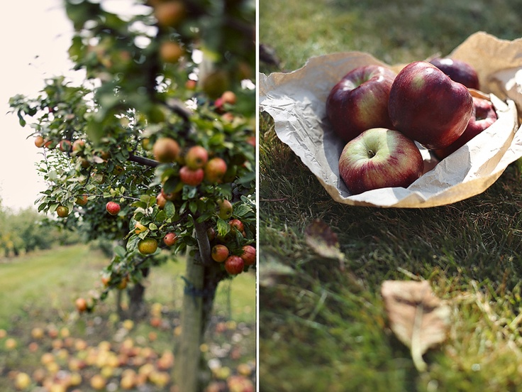 The Biggest and The Best Apple festival in Brogdale