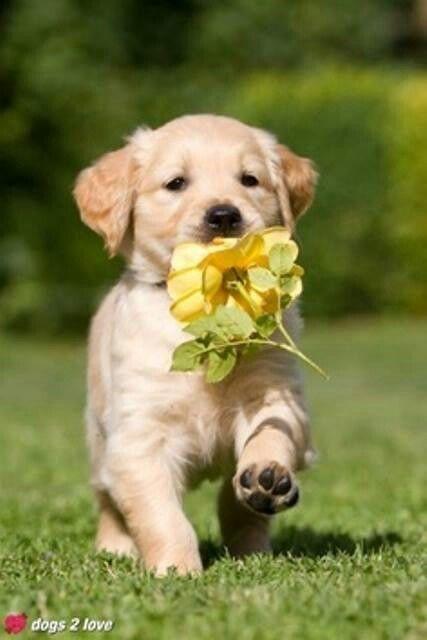 Mimoso...flores pra vocês!