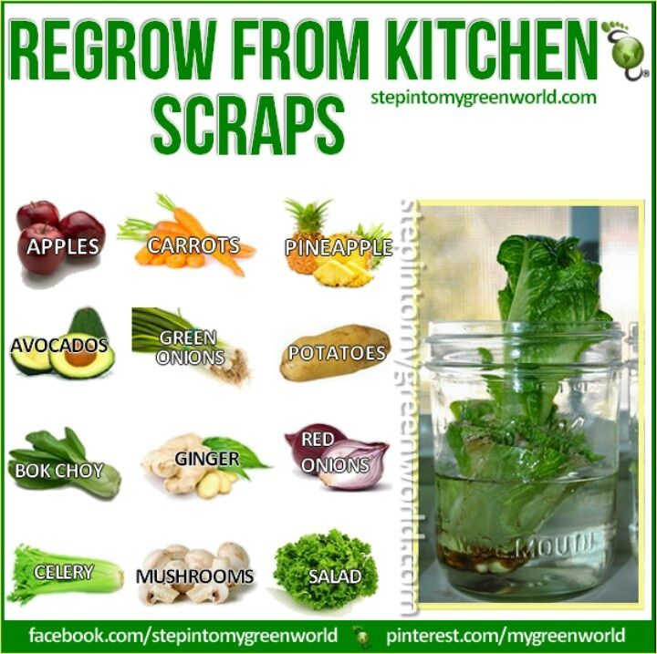16 Kitchen Scraps That You Can Re Grow: Fruits/Veggies You Can Regrow From Scraps