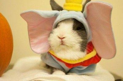 Dumbo the bunny-elephant. #Animal Hospital #Veterinarian #Pets #KAH #Vet #FrederickMaryland #Costumes #Halloween
