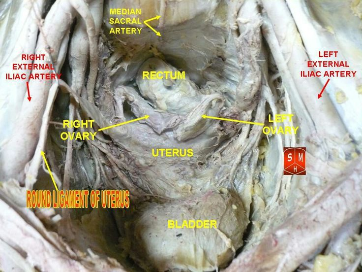 149 best images about Human Viscera Anatomy on Pinterest ...