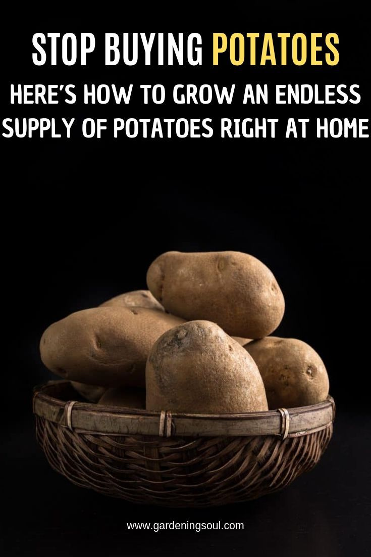 Stop Buying Potatoes. Here's How to Grow an Endless Supply of Potatoes Right at Home – Vegetables