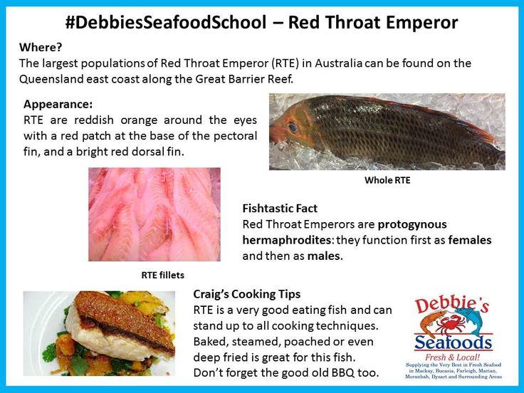 Red Throat Emperor (RTE) is a very popular fish at Debbie's Seafood.  #DebbiesSeafoodSchool #EatMoreFish #ShopLocalBuyLocalMackay