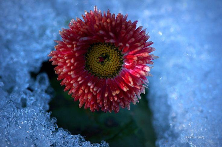 Snow and Colors - Kar ve Renkler
