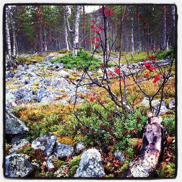 Syksy <3 #Fall #Lapland