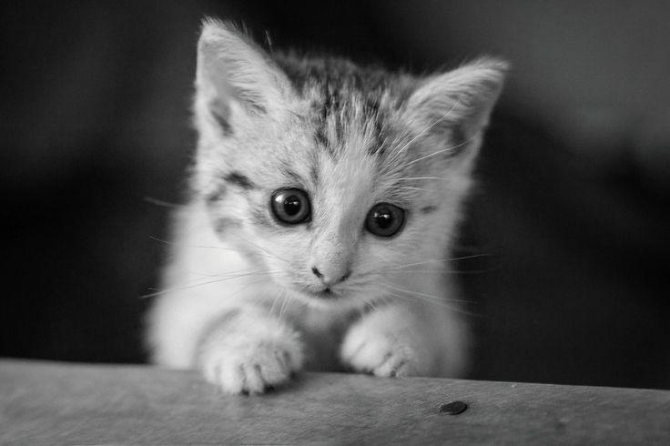 Котик!) by Угрюмый  on 500px