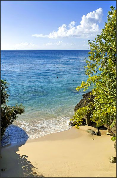 Imagine yourself soaking in the sun at Cove Spring House, Barbados Villa #Caribbean