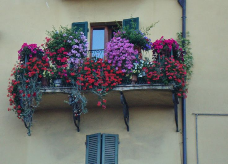 Pictures from Umbria http://unpiccologiardino.blogspot.it/