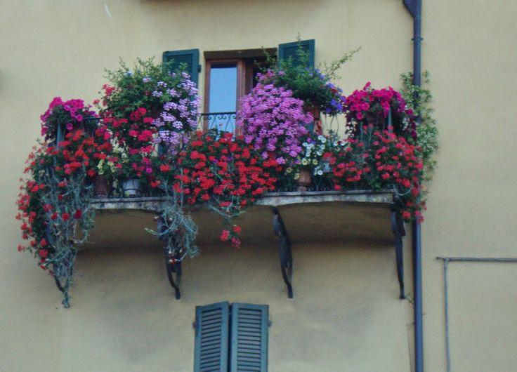 Pictures from Umbria http://unpiccologiardino.blogspot.it/
