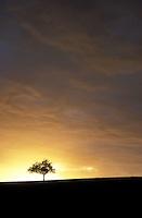 Europe, Germany, North Rhine-Westphalia, Bergisches Land region, fruit tree.....Europa, Deutschland, Nordrhein-Westfalen, Bergisches Land, Obstbaum.