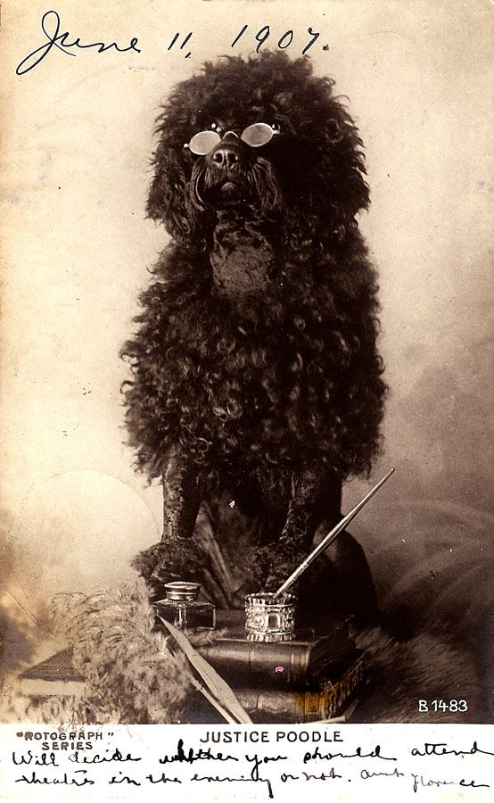 """""""Justice Poodle"""". June 11th, 1907 (via) So, apparently LOLhounds were a thing during the early 1900s. """"Will decide whether you should attend theatre in the evening or not. Aunt Florence."""""""