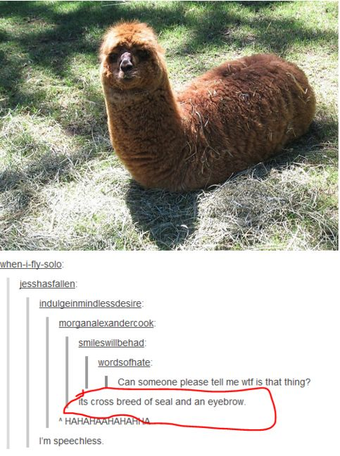 I seriously can't stop laughing, im laughing so hard I'm crying!!!