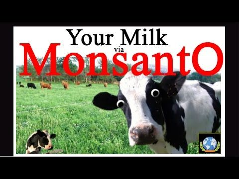 Monsanto Cancer Milk: FOX NEWS Kills Story and Fires Reporters! - YouTube