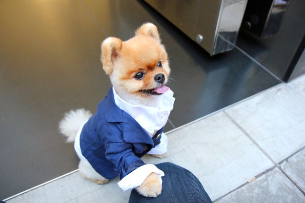 He was always so gracious. | 42 Things That Happened During My Day With The Second Most Famous Pomeranian In The World