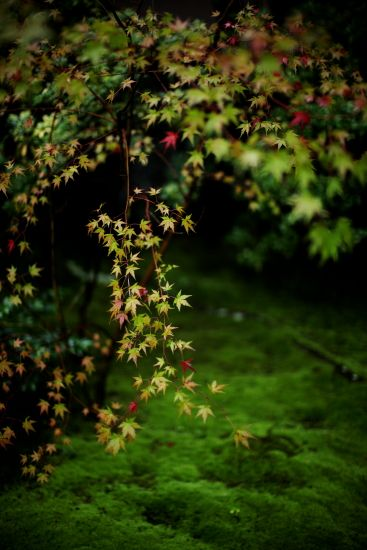 名勝 無鄰菴 京都 Moss garden at Murin-an, Kyoto, Japan