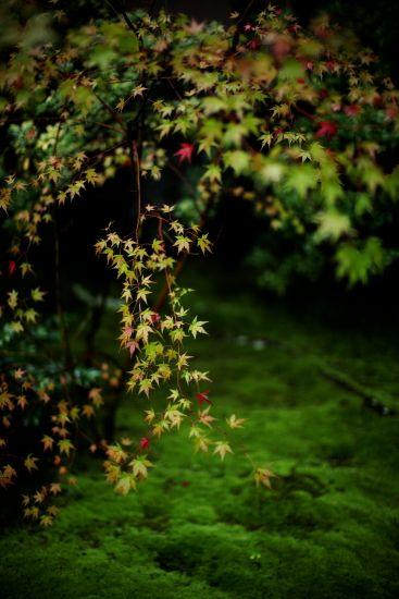 Moss garden at Murin-an, Kyoto, Japan