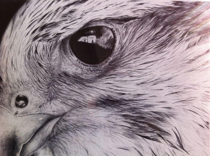 Halcón peregrino. Seguimos con la serie de animales, las rapaces, para mi unas de las aves más bellas y espectaculares. Todos los dibujos son mios, all drawings are mine.