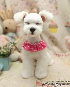 Furry Paws PEI Dog Grooming in Cornwall Prince Edward Island | ASIAN FUSION GROOMING
