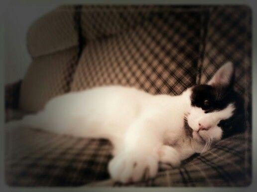 Ho una #vita veramente #stressante #Goku #cat #sleep #gatto #dormire