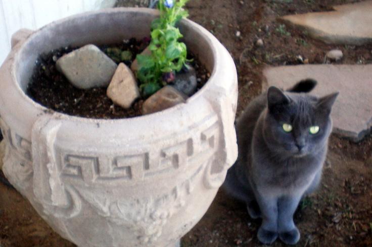 "My Smokey and ""her"" planter!"