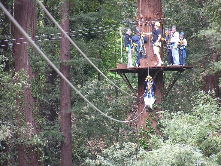 Zipline Canopy Tour In Redwoods Of Mount Herman