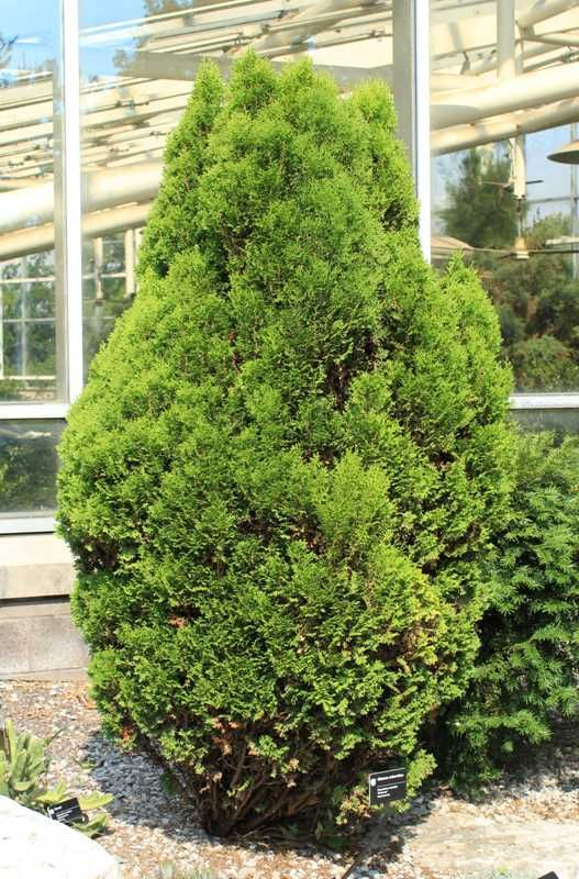 72 Best Non Flowering Outdoor Plants Images On Pinterest 400 x 300