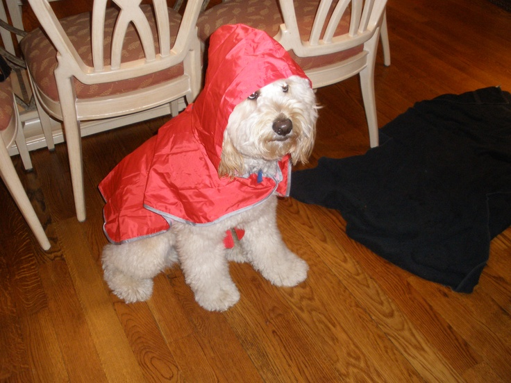 """My family went on vacation and all they brought me back was this red rain coat...I mean really!"""