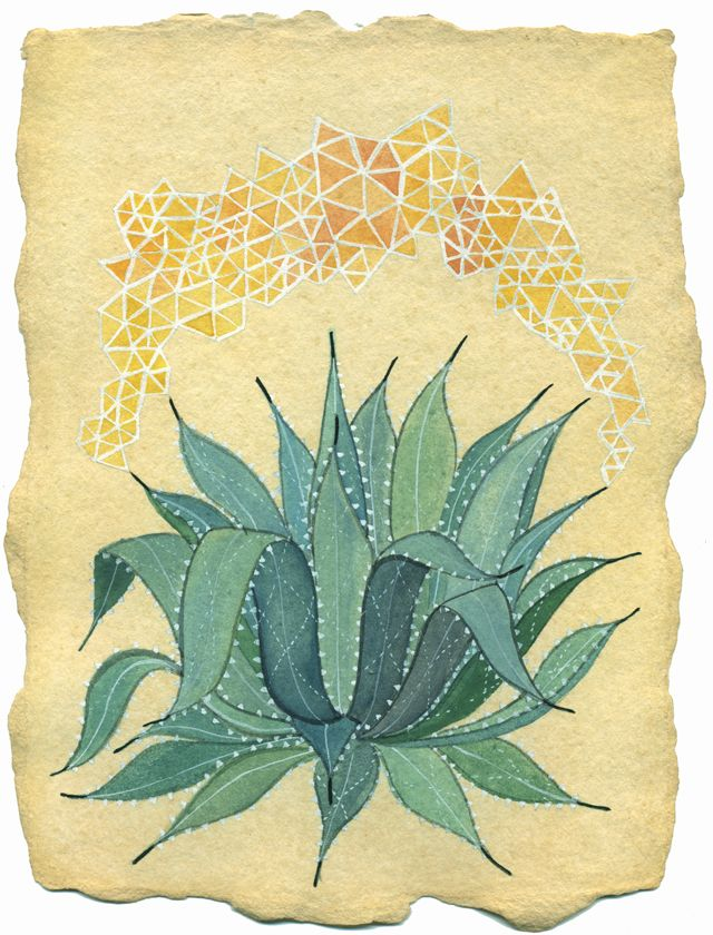 painting of a succulent (not only do I want to grow them this spring, but I would also like to try to draw / paint them)