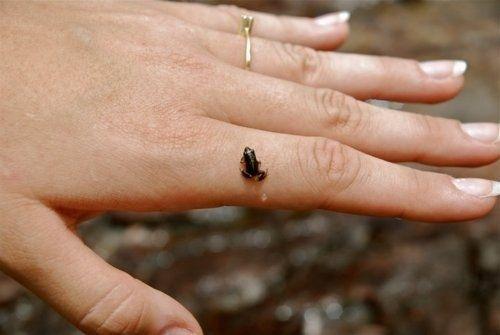 Tiny Frog | 86 Very Tiny CuteThings
