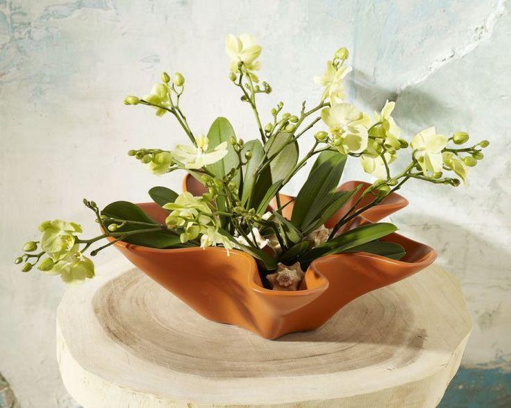 adelaparvu.com despre ingrijirea orhideei dupa ce se ofilesc florile, text Carli…