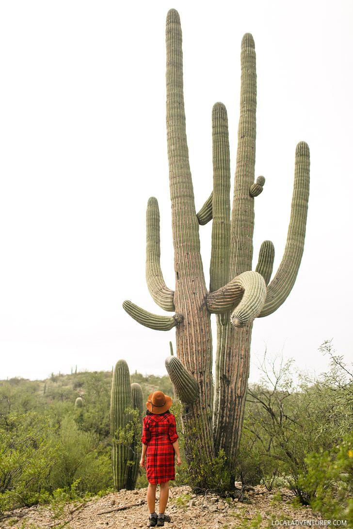 11 Beautiful Things to Do in Saguaro National Park // localadventurer.com