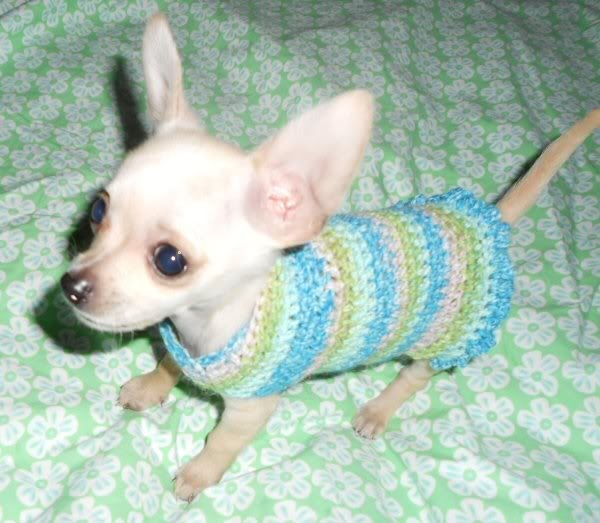 Knitting Pattern Dog Sweater Chihuahua : 17 Best images about Crochet patterns for your Pampered ...