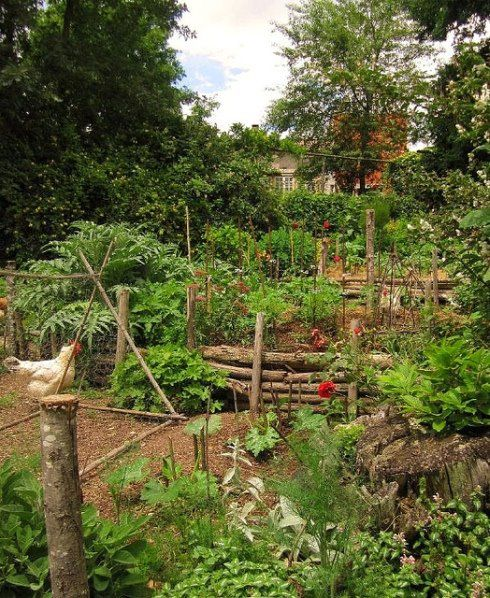 Wild garden with the chickens scratching away.    continentinacottage.blogspot.com.au