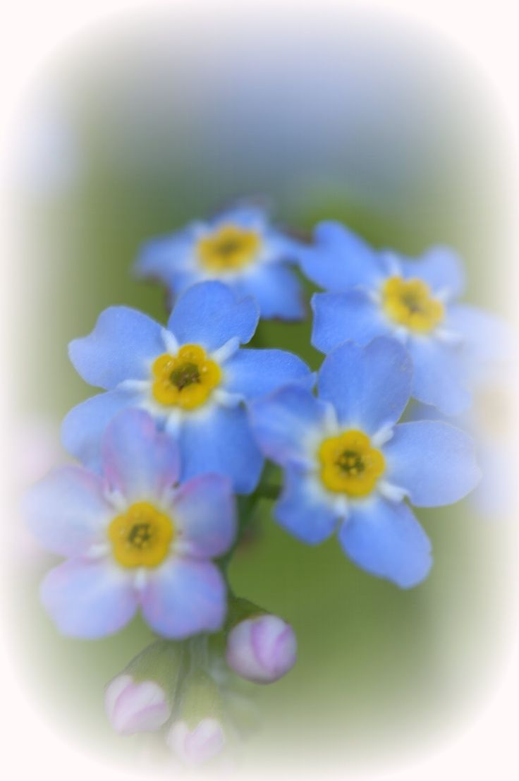 83 best nature flowers images on pinterest flowers nature and