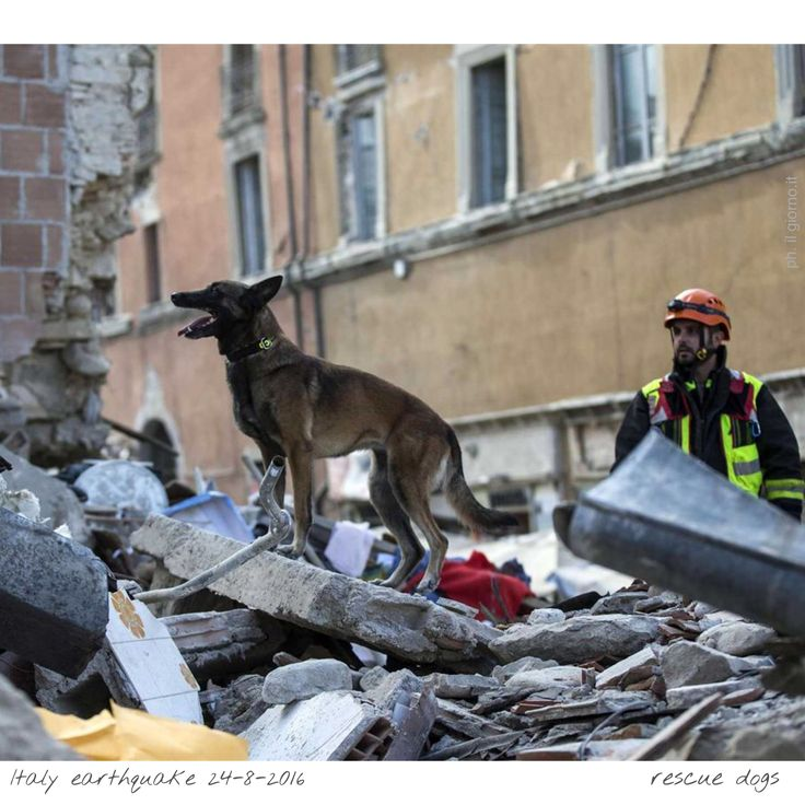 24 Aug 2016: a powerful #earthquake has devastated a string of mountain towns in central Italy, trapping residents under rubble, killing at least 278 people and leaving thousands homeless. Thanks VOLUNTEERS... and officials... who dug with their bare hands... to save civilians. #Gabriella #Ruggieri #Italy #Amatrice #ArquataDelTronto #PescaraDelTronto #ProtezioneCivile #volunteer #italianredcross #vvff #firefighter #lazio #marche #umbria #Help #fundraiser #rescuedog