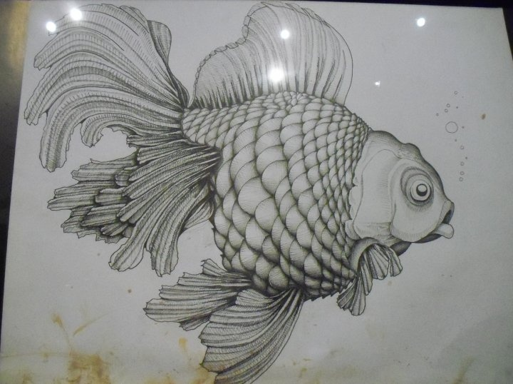 39 best clay fish images on pinterest clay fish pisces for Clay koi fish