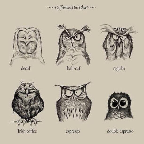 The Irish Coffee Owl Makes Me Giggle