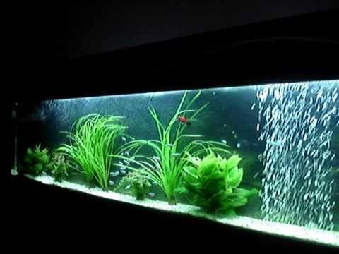 Langwerpig muur aquarium flataqua 175